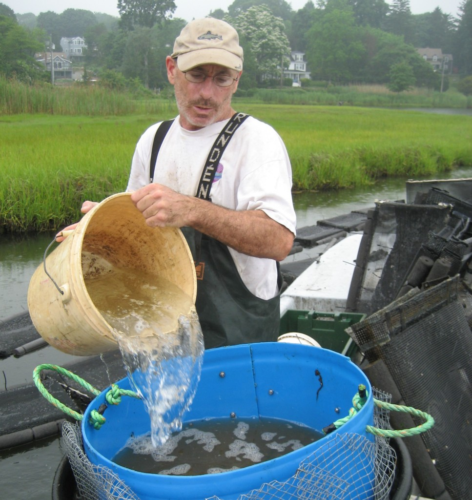 Steve Plant sorts oysters